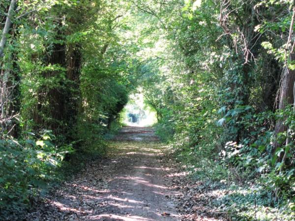 Chemin dans les anciennes parcelles de vergers à Bisseuil