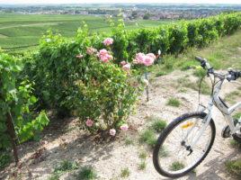 Excursion généalogique à vélo : Vertus (Marne)