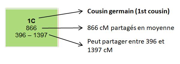 ADN partagé (en centimorgans) pour un cousin germain
